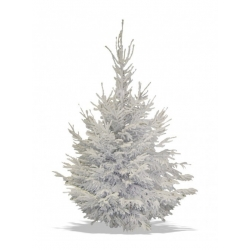 Flocked Nordmann tree white